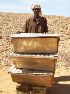NUH MOHAMED ADEN - MALABKO CALMADOW APIARY IN BADHAN -SHOWS BEE HIVES SUPPLIED FROM ARTISANS IN ERIGAVO