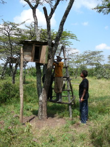 Box Hives:  Mr. Andrew Makau, a small scale farmer from Nakuru with his innovative box hive beekeeping system