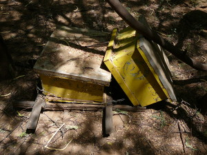 Abandoned Langstroth Hives
