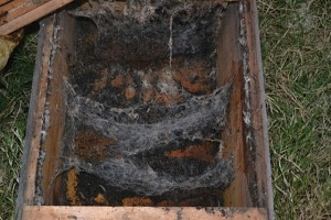 "Hive destroyed by wax moth and small hive beetles. Notice wax moth larvae crawling on the bottom of the hive. The best way to control pests like these is with well constructed hives adhering to the rules of ""bee space""; and large strong colonies, which will control these pests by removing them from the hive. This hive needs to be cleaned re-baited and hung just before swarm season. This will help improve the odds of getting a primary swarm into your re-baited hive."